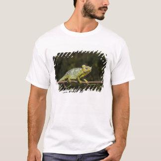 Vifta med-nacke kameleont t shirt
