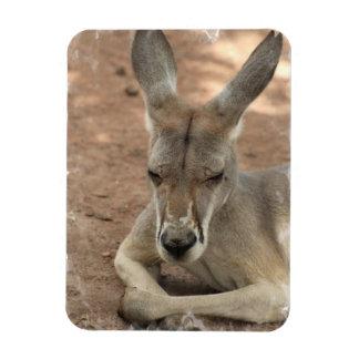 Vila den högvärdiga magneten för känguru magnet