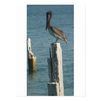 Vila för pelikan vykort