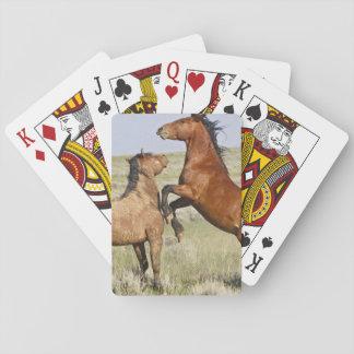 Vilda hästar 2 för vild för hästEquuscaballus) Casinokort