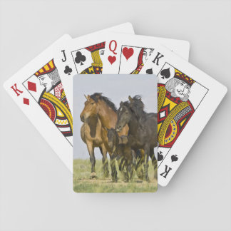 Vilda hästar 3 för vild för hästEquuscaballus) Spelkort