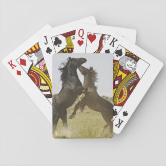 Vilda hästar för vild för hästEquuscaballus) Casinokort