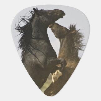 Vilda hästar för vild för hästEquuscaballus) Plektrum