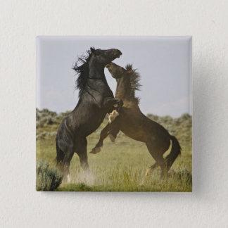 Vilda hästar för vild för hästEquuscaballus) Standard Kanpp Fyrkantig 5.1 Cm