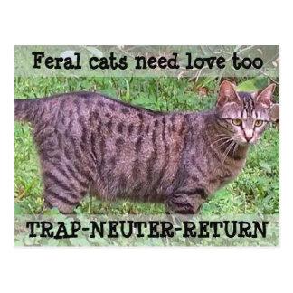 Vilda katter behöver tabby katt för kärlek för - vykort