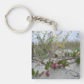 Vildbär på stranden