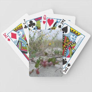 Vildbär på stranden spelkort