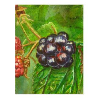 Vildbjörnbär som ripening i sommar vykort