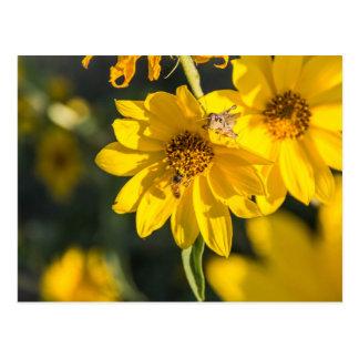 Vildblomma med biet vykort