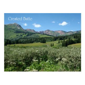Vildblommar i krönad Butte Vykort