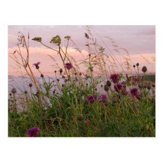 Vildblommar på skymningen vykort