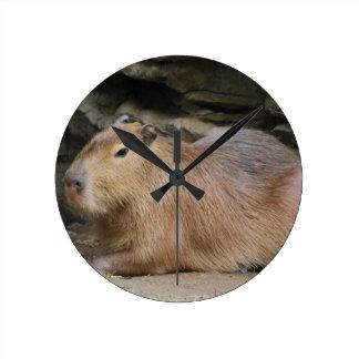 Vildcapybaraen tar tid på rund klocka