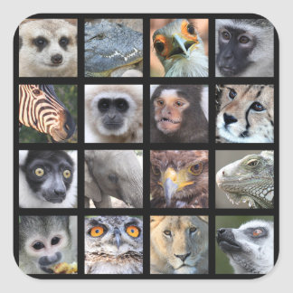 Vilddjuransikten -- Däggdjur reptilar, fåglar Fyrkantigt Klistermärke