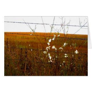 Vilden blommar över Kansas Hälsningskort