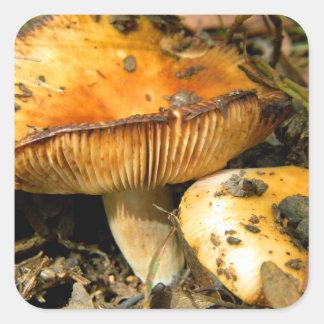 Vilden plocka svamp klistermärken