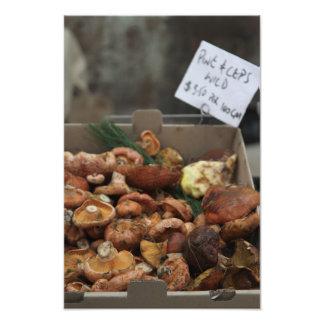 Vilden plocka svamp till salu fototryck