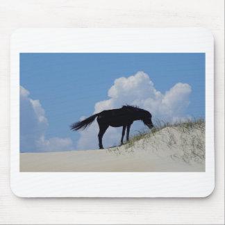 Vildhäst i OBX Musmatta