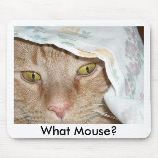 Vilken mus/orange tabby katthumor musmatta