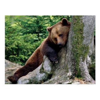 Vilsam brun björndjurlivserie nr. vykort 10
