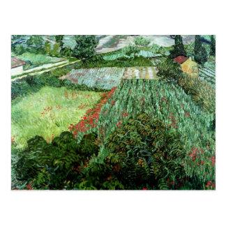 Vincent Van Gogh | fält med vallmor, 1889 Vykort