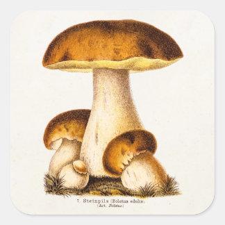 Vintage1800s plocka svamp den ätliga fyrkantigt klistermärke
