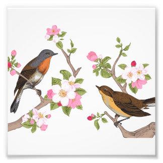 vintage fåglar, blommigt, mönster, teckning,