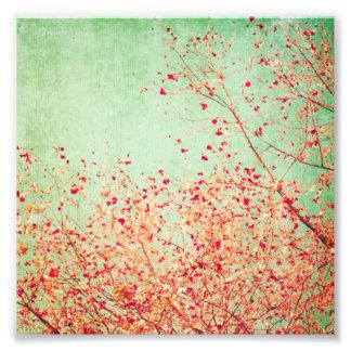 Vintage körsbärsröd blommar som är lantlig, fototryck