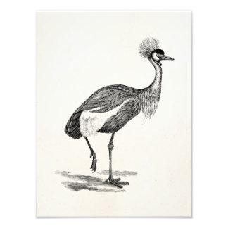 Vintage krönad mall för kranfågelillustration fototryck
