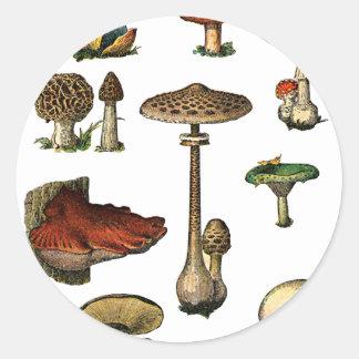 Vintage plocka svamp klistermärken