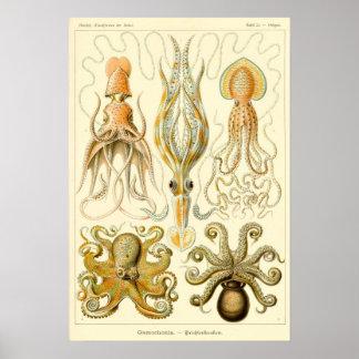 Vintagebläckfisktioarmad bläckfisk Gamochonia av Poster