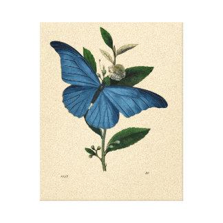 Vintageblåttfjäril Canvastryck