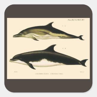 Vintagedelfiner, marin- djur och däggdjur fyrkantigt klistermärke