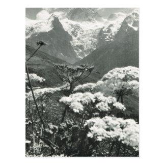"""Vintagefrankriken, Chamonix """"Mont Blanc """", Vykort"""