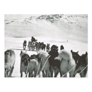 VintageGrönlandet, hund teams i snön Vykort