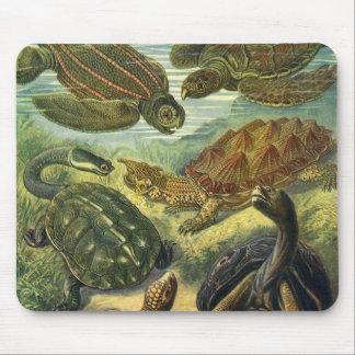 Vintagehavssköldpaddor och sköldpaddor av Ernst Musmattor