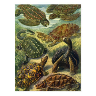 Vintagehavssköldpaddor och sköldpaddor av Ernst Vykort