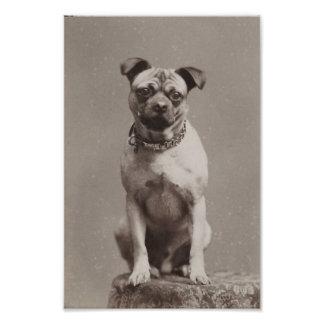 Vintagehund Fototryck