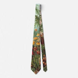VintageMossväxter av Ernst Haeckel, Muscinae Slips