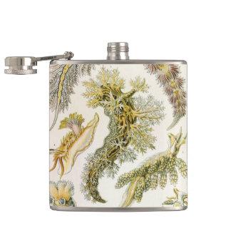 VintageNudibranchia, havskulor av Ernst Haeckel Fickplunta