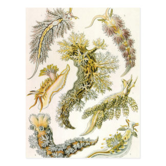 VintageNudibranchia, havskulor av Ernst Haeckel Vykort