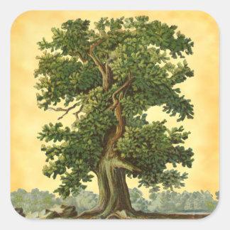 VintageOakträd på FauxParchmentklistermärkear Fyrkantigt Klistermärke