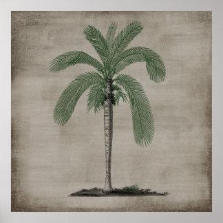 Vintagepalmträd