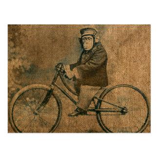 Vintageschimpans som rider en cykel vykort