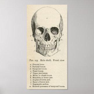 Vintageskalleaffisch Poster