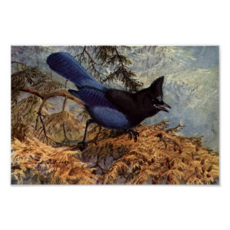 VintageStellers affisch för konst för Jay fågel