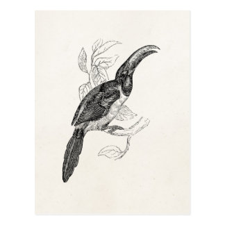 VintageToucan tropisk fågel - Retro 1800sfåglar Vykort