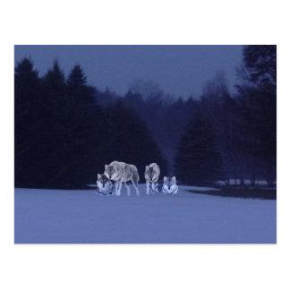 VintervargLuminosity Vykort