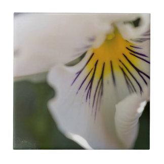 violet i trädgården kakelplatta