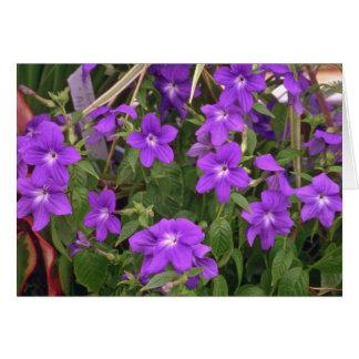 Violetta ogräs hälsnings kort