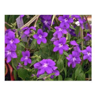 Violetta ogräs vykort